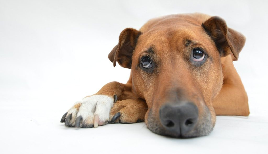 CBD for dog with health problems