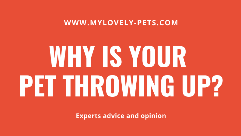 mylovevlypets pet throwing up reasons header