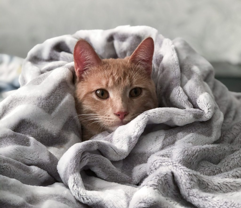 cat disease blanket